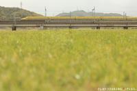 春の風に乗って - PTT+.