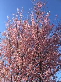 春が来た🌼 - やさしい時間