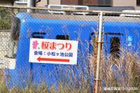 この日が満開! 『三浦海岸 桜まつり2020』 - 写愛館