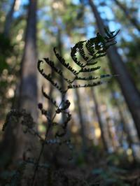 森の鼓動 - 節操のない写真館