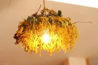 オーダー頂いたミモザのシャンデリア「粉雪シフォンさんに納品です。」編 - ドライフラワーギャラリー⁂ふくことカフェ