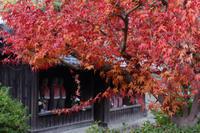 晩秋の九品寺 - katsuのヘタッピ風景
