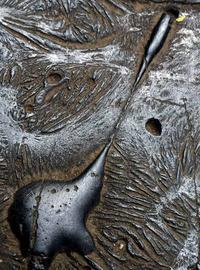 北区のカラミ煉瓦 - 萩原義弘のすかぶら写真日記