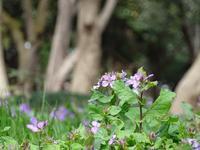 若芽とオナガ - Magnolia Lane 2
