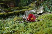 谷戸の春 - 清治の花便り