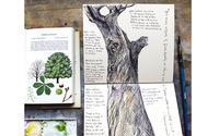 ドライグランジのセイヨウトチノキ : 2月の樹皮 ハナさんのブログより - ブルーベルの森-ブログ-英国のハンドメイド陶器と雑貨の通販