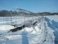 ハウス除雪状況と融雪剤散布 - 長福ファームのブログ