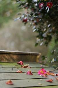 椿落つ - ecocoro日和