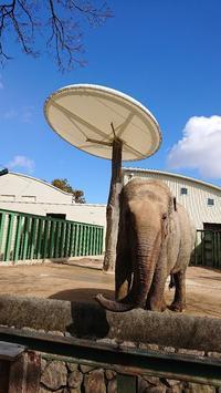 空に浮かぶ白い雲 - ゾウは勘定にいれません2  to say no thing of the elephant