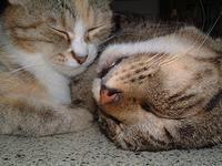 プーちゃんの命日 - ぶつぶつ独り言2(うちの猫ら2021)