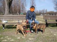 コウ改めにペペに家族が出来ました!!! - 子豚たちの反乱 2  ~保護犬たちの幸せさがし~