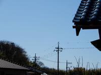 蕗(そして・ユキワリイチゲ) - 庭を眺めて…コーヒータイム