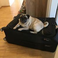 危うく死ぬとこだった~(;´Д`) ANAビジネスクラス空の旅♪ - パグ犬日記 in Deutschland