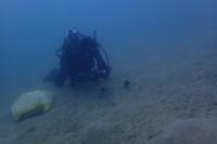 20.3.11例のハゼ調査等、でした。 - 沖縄本島 島んちゅガイドの『ダイビング日誌』