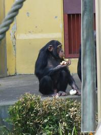 おやつタイムその後[京都市動物園] - a diary of primates