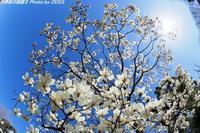 春を探しに光が丘公園へ - 四季彩の部屋Ⅱ