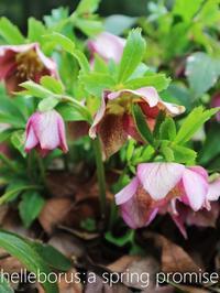 3.11:春を約束する花 - serendipity blog