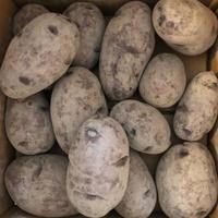 ジャガイモの植え付けと豆ネット - Salad Days