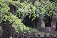 打ち合わせ後の杉並区界隈逍遥。 - 一場の写真 / 足立区リフォーム館・頑張る会社ブログ