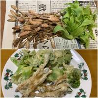 旬の山菜 - 「今日の一枚」