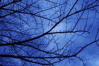桜を待つ日々 - はーとらんど写真感