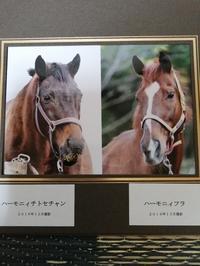 9年目の3月11日 - ぴっぴの文鳥と馬の日記時々猫