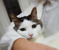 可愛い猫 - 好食好日