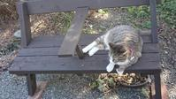 猫ちゃんとシニアの恋は危険かな? - 楽しく元気に暮らします