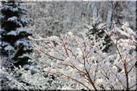 春の雪 - 北海道photo一撮り旅