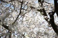 春はすぐそこ / Spring is coming - Seeking Light - 光を探して。。。
