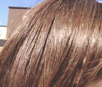 まんばのけんちゃんと、ショートヘア。 - SANUKI-LOKO'S STYLE