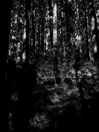 森の中 - 節操のない写真館