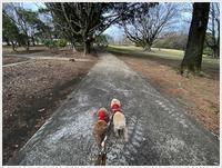 今日は1日天気が持ってくれたから、散歩も庭仕事も、たっぷりできたね~明日は。。。 - さくらおばちゃんの趣味悠遊