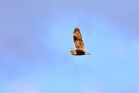 青色の空に - 綺麗な野鳥たち