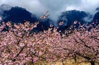 桜の旅の始まり - 撃沈風景写真