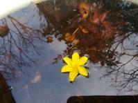 春匂う… - 侘助つれづれ