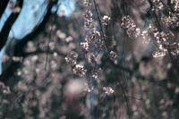 上野らへん - IN MY LIFE Photograph