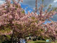 舎人公園は… - 自然と遊楽