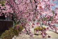 天理市三島町 - ぶらり記録 2:奈良・大阪・・・
