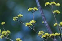 黄色の花♪ - happy-cafe*vol.2