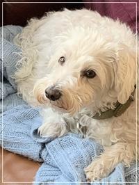Dog sitter - カナディアンロッキーで暮らす