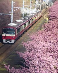 憧れの桜風景♪ - 今日もカメラを手に・・・♪ part2