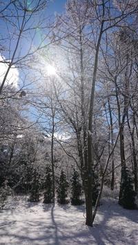 初春の雪 - 追分日乗