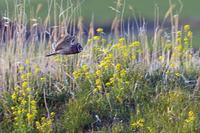 春のコミミ - 比企丘陵の自然