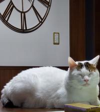 のし - 素人木工雑貨と犬猫日記
