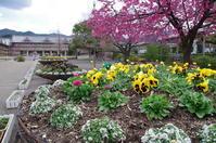 天理市三島町花壇 - ぶらり記録 2:奈良・大阪・・・