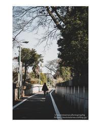 彼岸入り - ♉ mototaurus photography