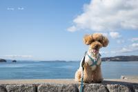 ロンと共に♪ - Lovely Poodle