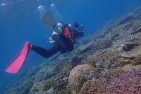 20.3.18濃く、楽しい日々。 - 沖縄本島 島んちゅガイドの『ダイビング日誌』