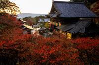 紅葉が彩る奈良2019夕暮れ紅葉(岡寺) - 花景色-K.W.C. PhotoBlog